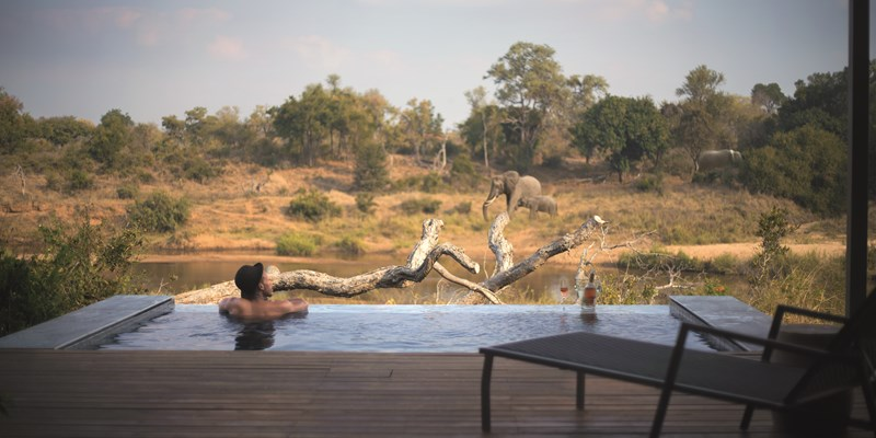 South Africa voted best safari experience in Africa 800x400